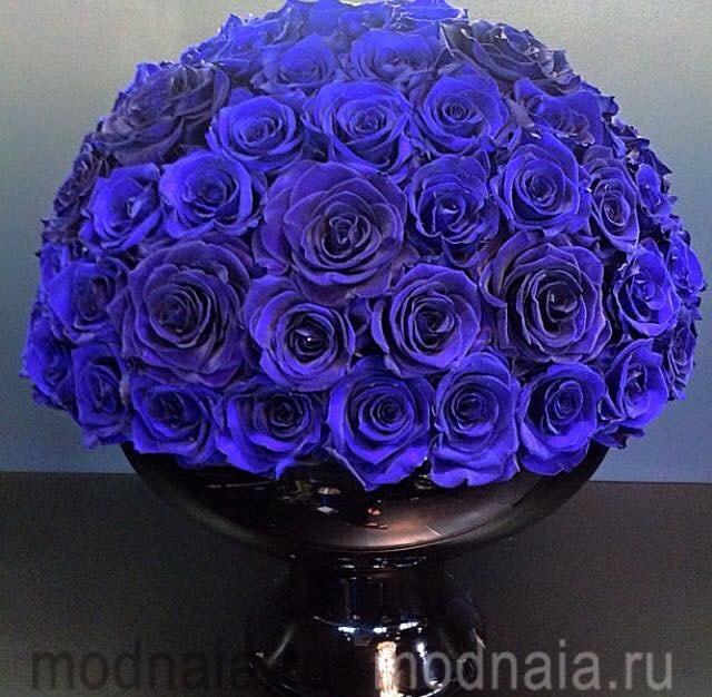 Натуральные синие розы и их особенности